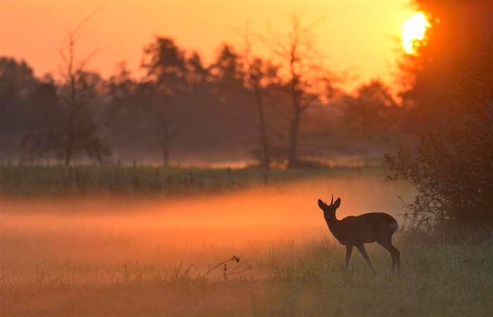 Dyr i landskabet – 3. plads