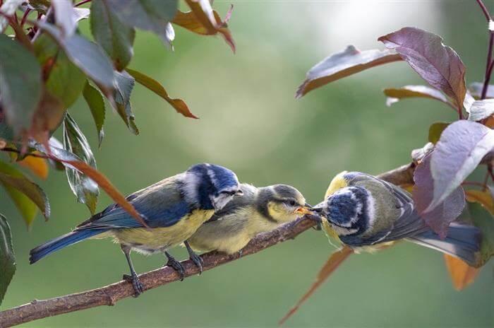 Fugle – 1. plads