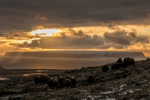 Dyr i landskabet – 2. plads