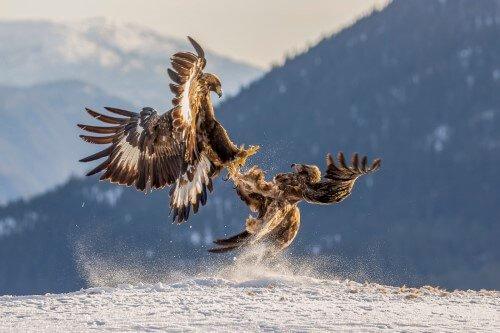 Fugle – 2. plads