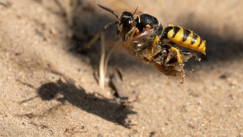 Insekter – 1. plads