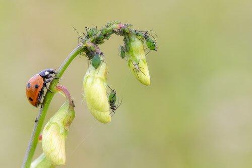 Insekter – 3. plads