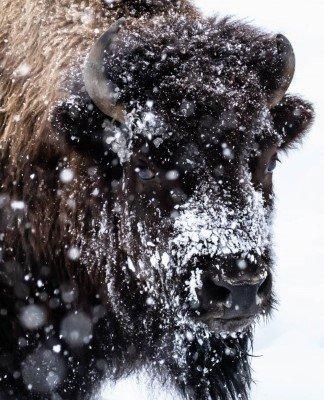 Pattedyr – 2. plads